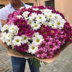 51 кустовая хризантема