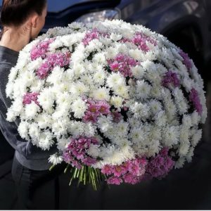 51 хризантема «Балтика» (пушистые)