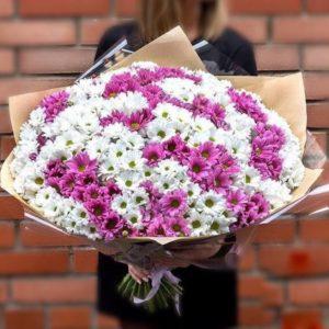Хризантемы кустовые микс *разные цвета*
