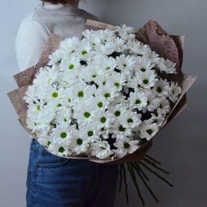 15 хризантем «Бакарди» (ромашковидные)