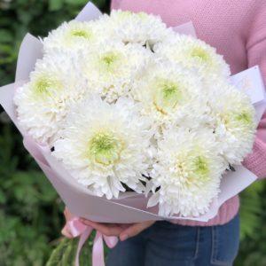 25 хризантем одноголовых