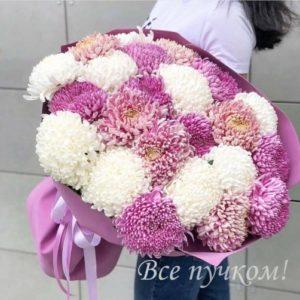 101 хризантема одноголовая